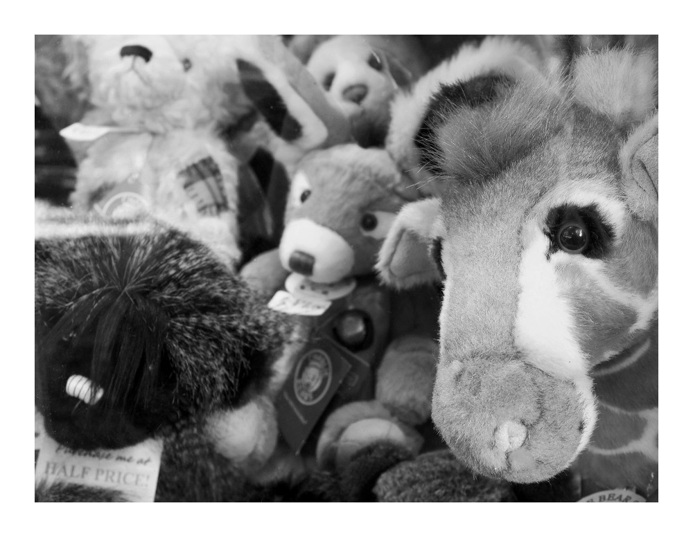 trapped toys norwich sad behind glass