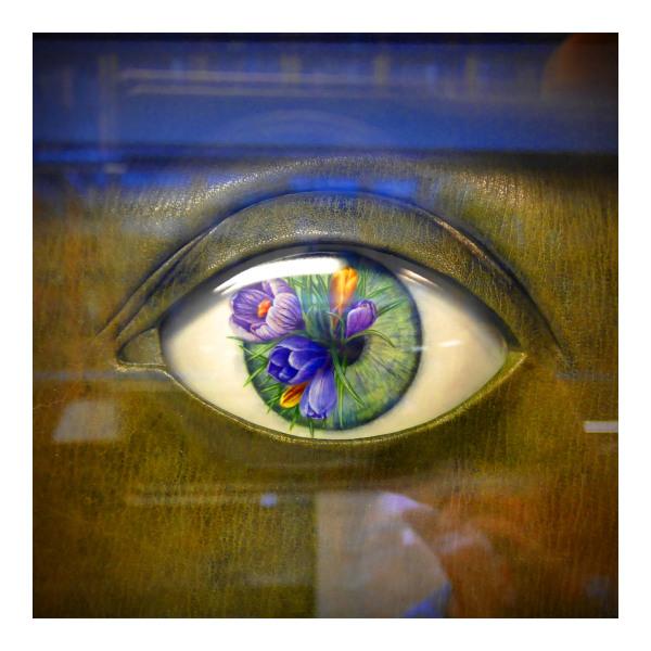 An Eye in a Book