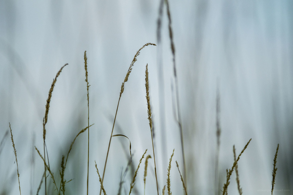 grasses river trent shardlow telephoto
