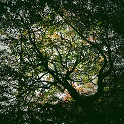autumn fall leaves woods colour