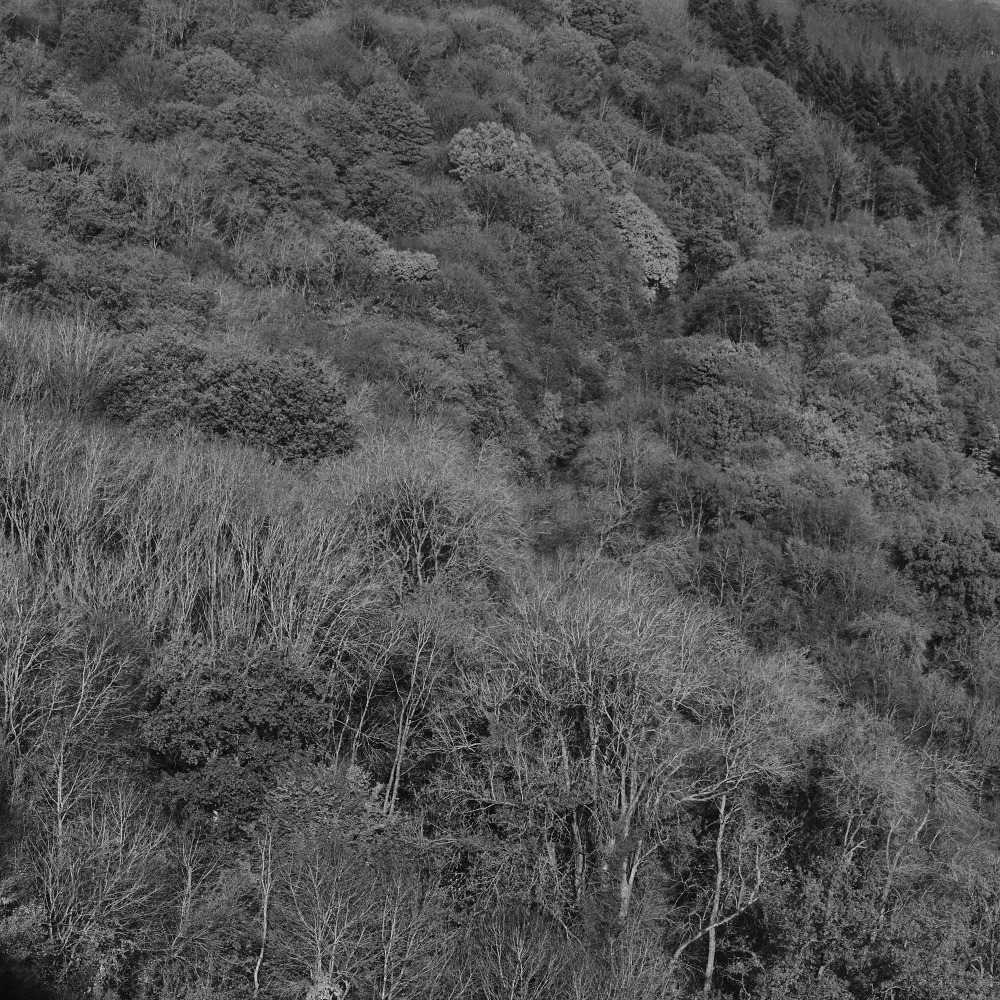 wye valley borders gloucestershire forests woodlan