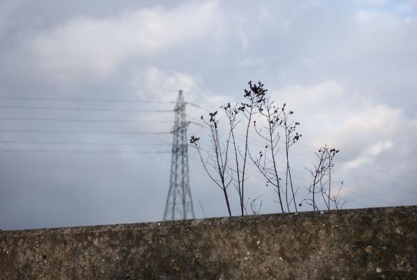 Pylon & Plant