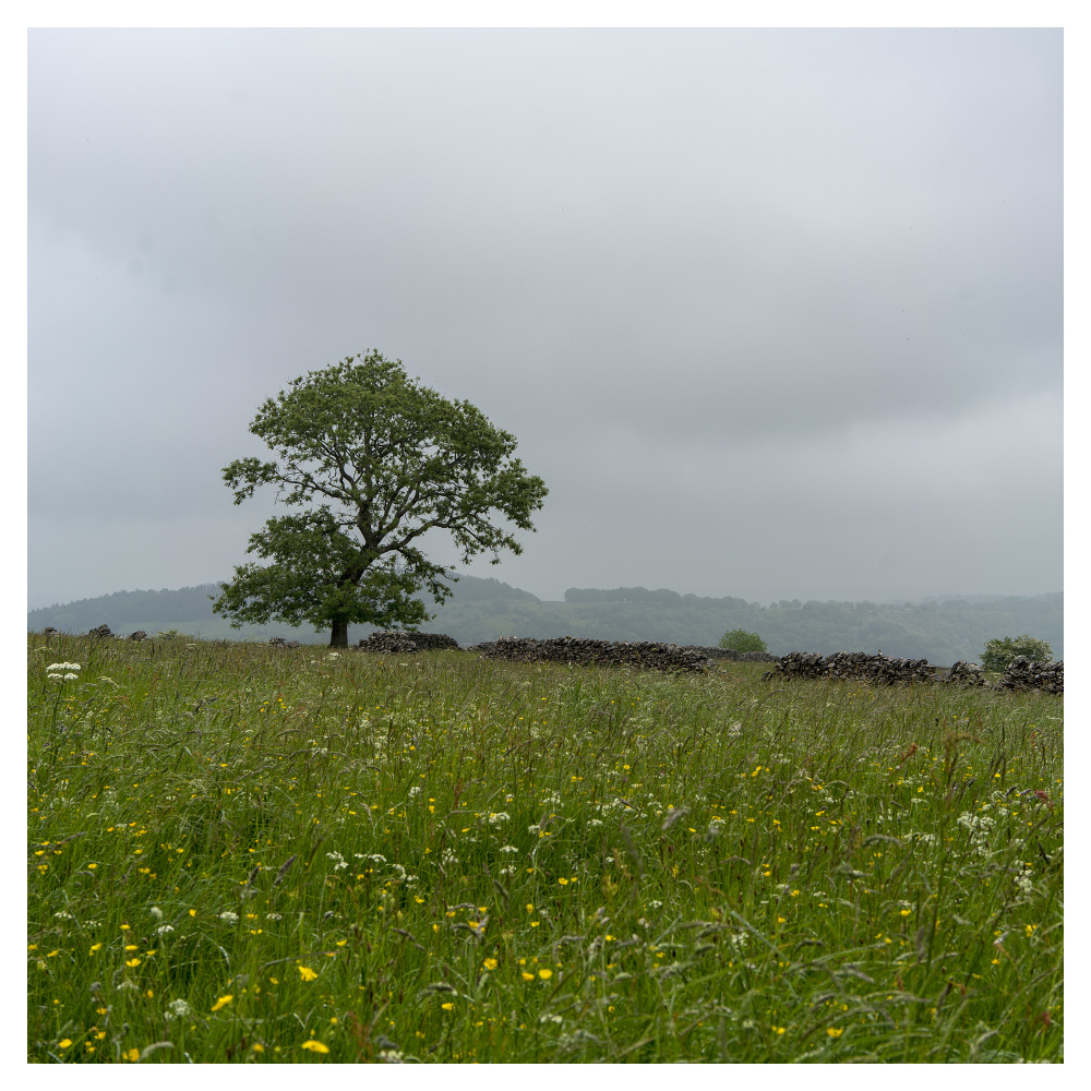 derbyshire middleton top countryside maytime sprin