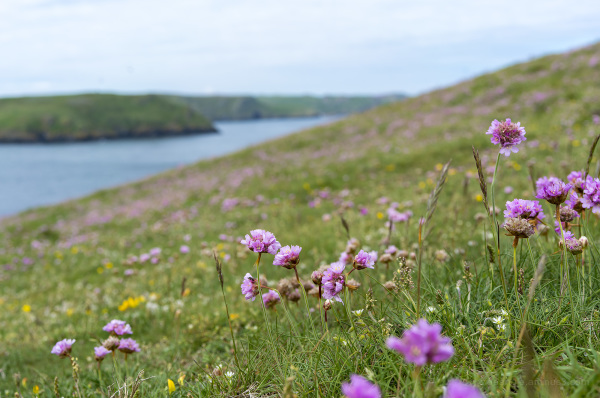 Pembrokeshire Wales coastal seaside walks beaches