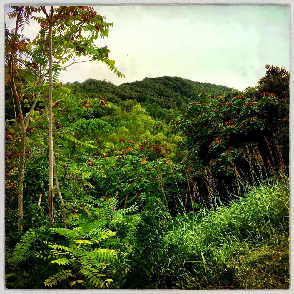 formia mountains gardens farmlife hills plants