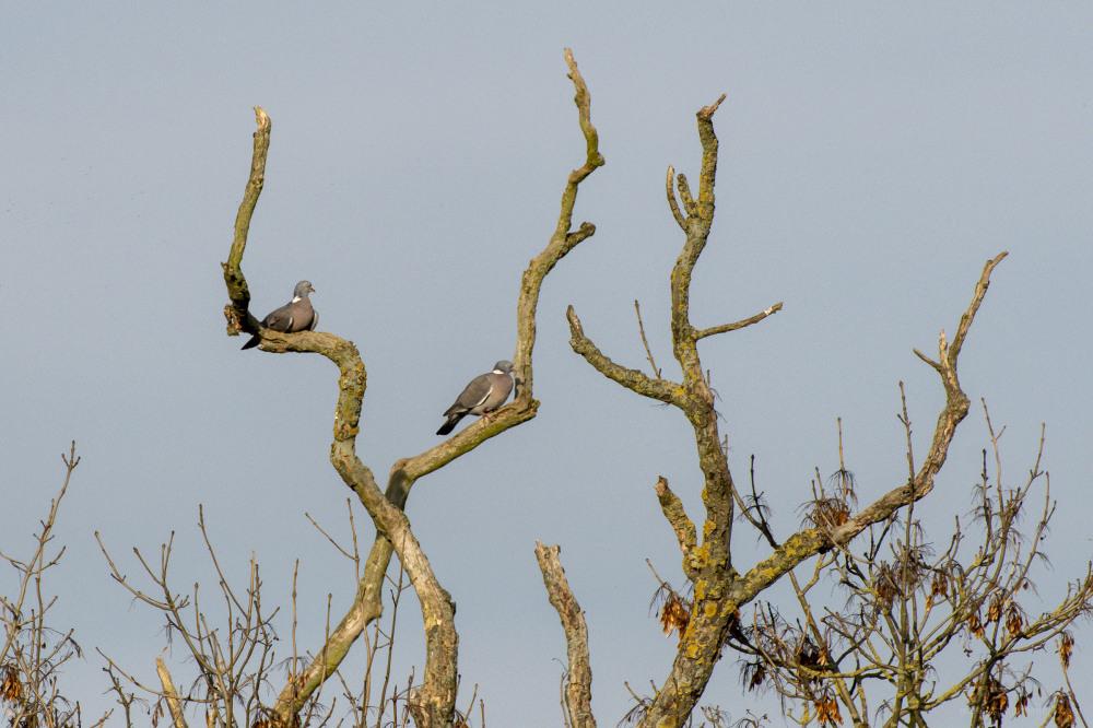 birds trees