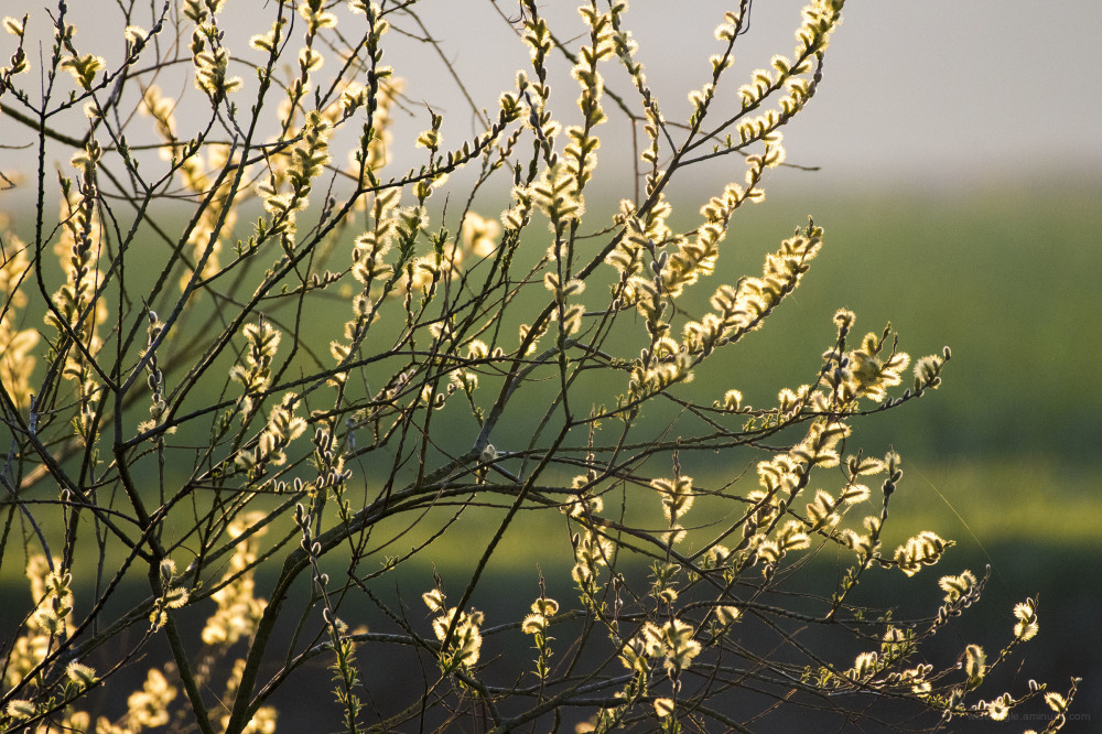 spring trees flowers blossom light