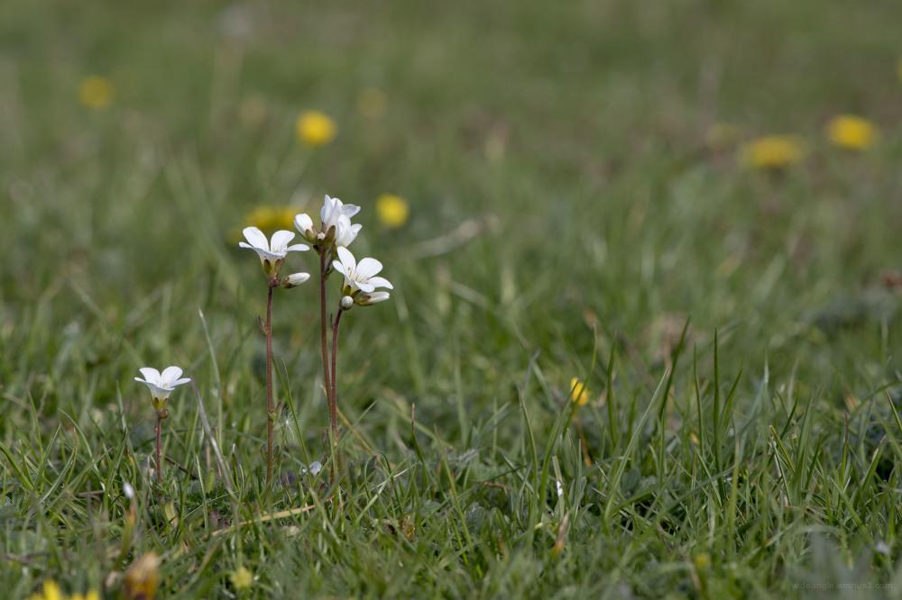 flora flowers derbyshire grasslands nature spring