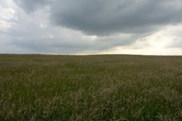 Grassland by east Riding Coast