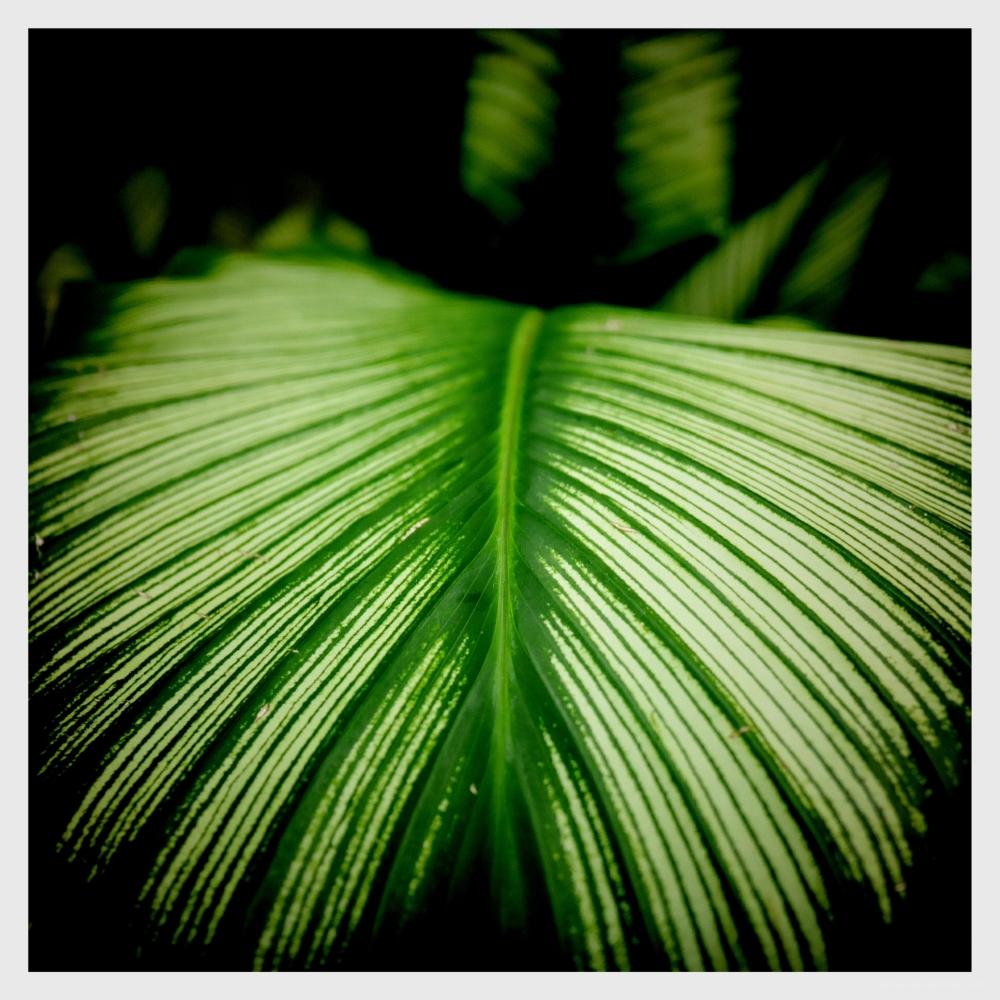 nature plantlife vegetation earth green flowers