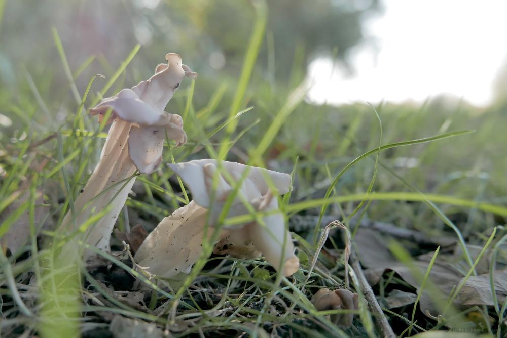 toadstools fungi mushrooms autumn spores
