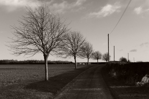 winter walks sunlight cold air