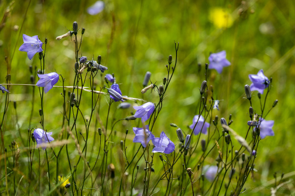 summer woods fields wild spaces flora fauna