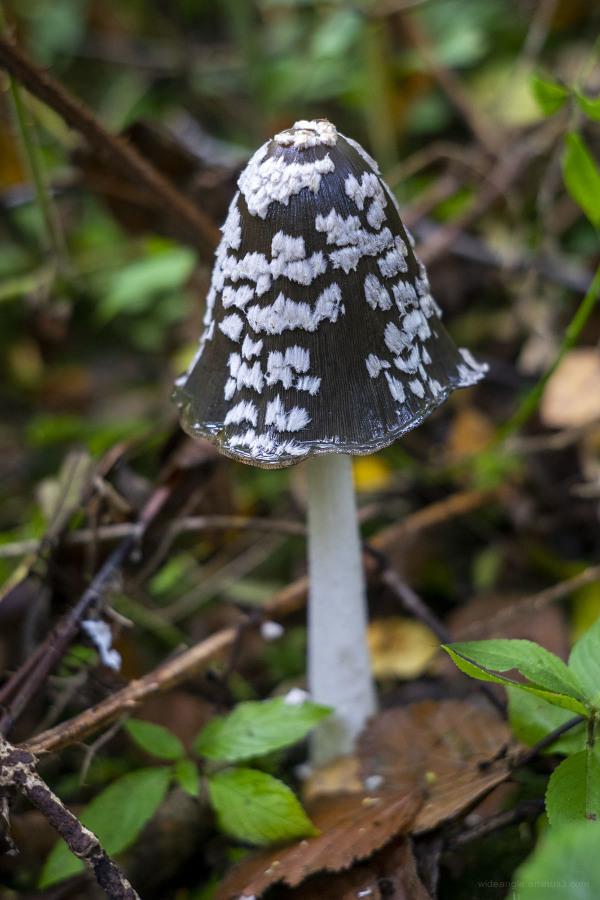 autumn fungi cloud weather nature change fall