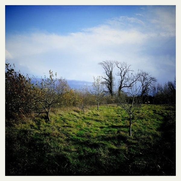 winter landscape light countryside nature