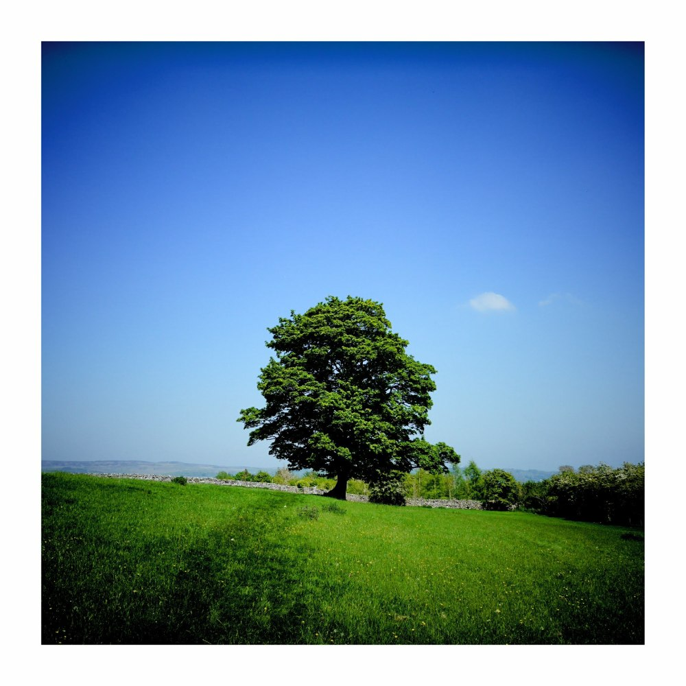 yorkshire dales hills summer landscape