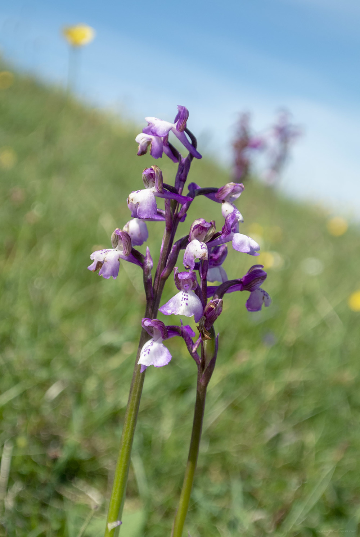 derbyshire flowers landscapes
