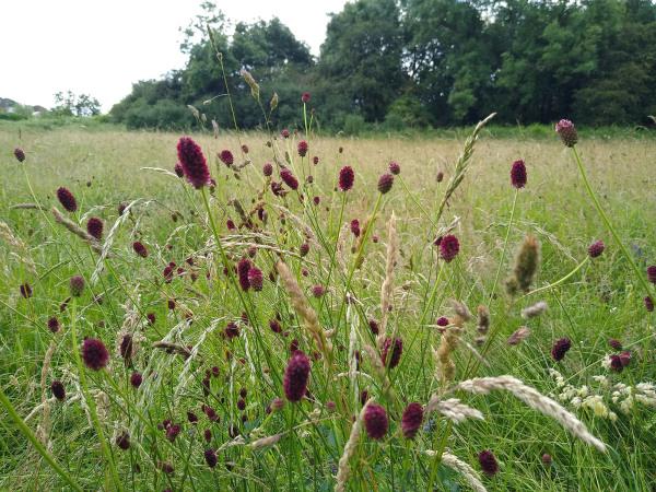 plants flowers nature summer blooms colour