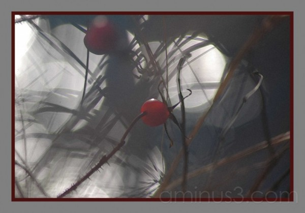 rose hips creek reflection