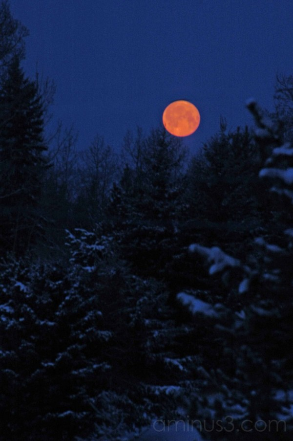 orange moon set over snowy trees