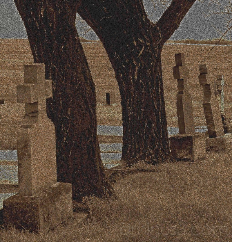 grave stones crosses trees