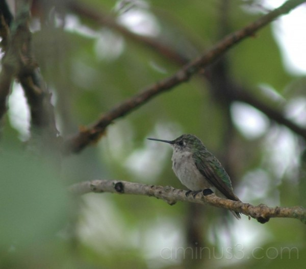 close up of hummingbird on branch of tree