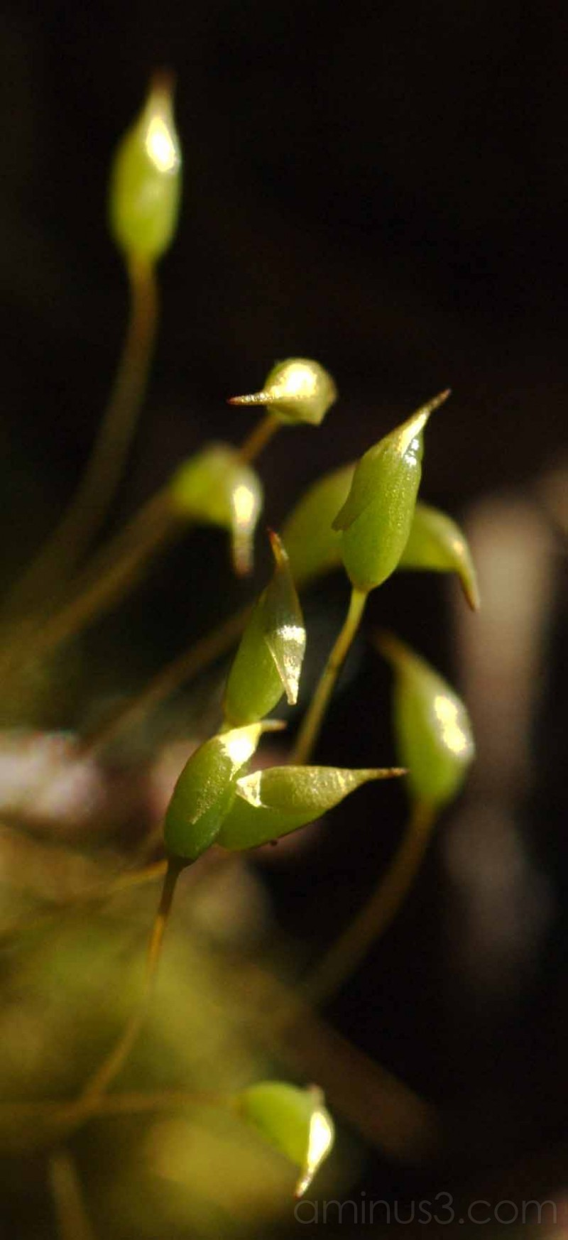 macro of new growth on moss