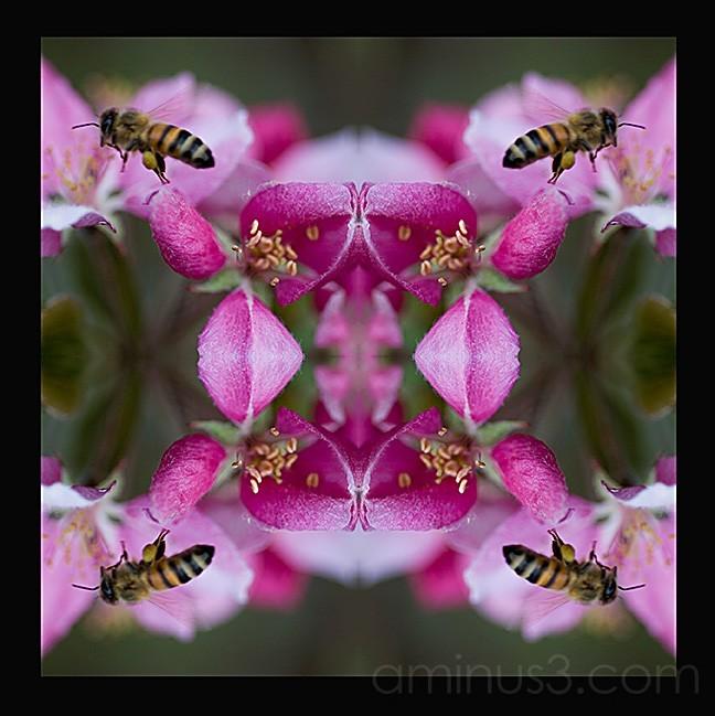 Freaky Deeky Bee..