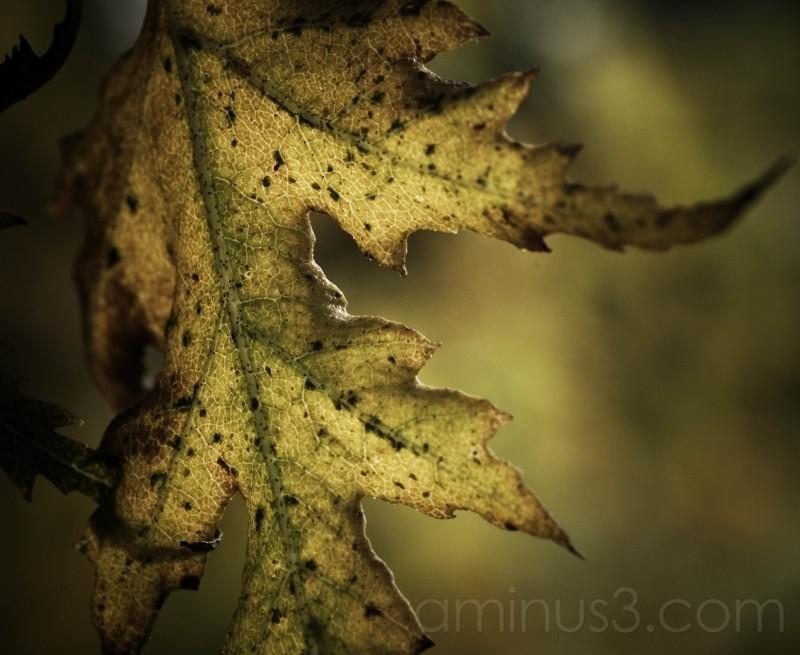 Deeply fall..