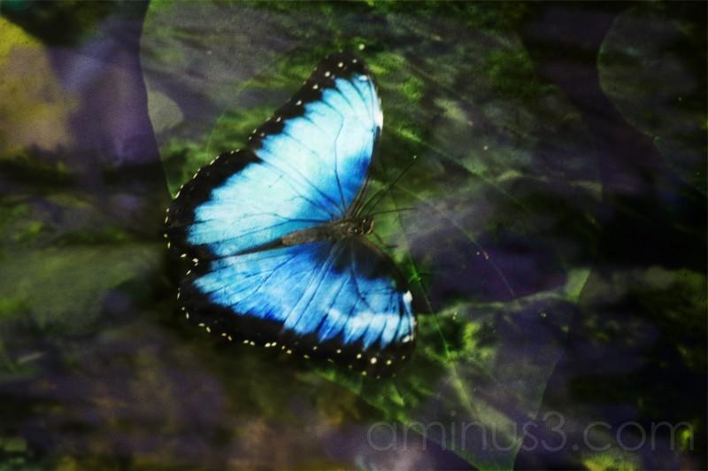 Butterfly dreams...