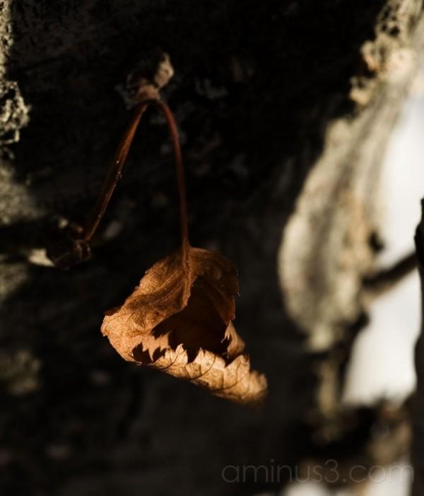 hanging..