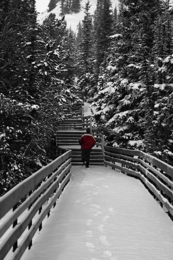 winter wander-dan