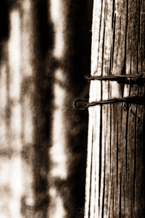 fenced..