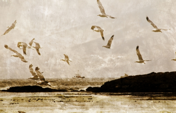 gulls' echo l