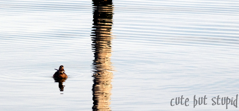 ripples in reflection