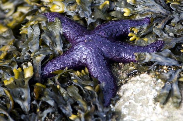chill-axing starfish