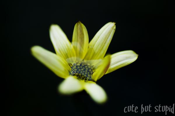 november's flower 2