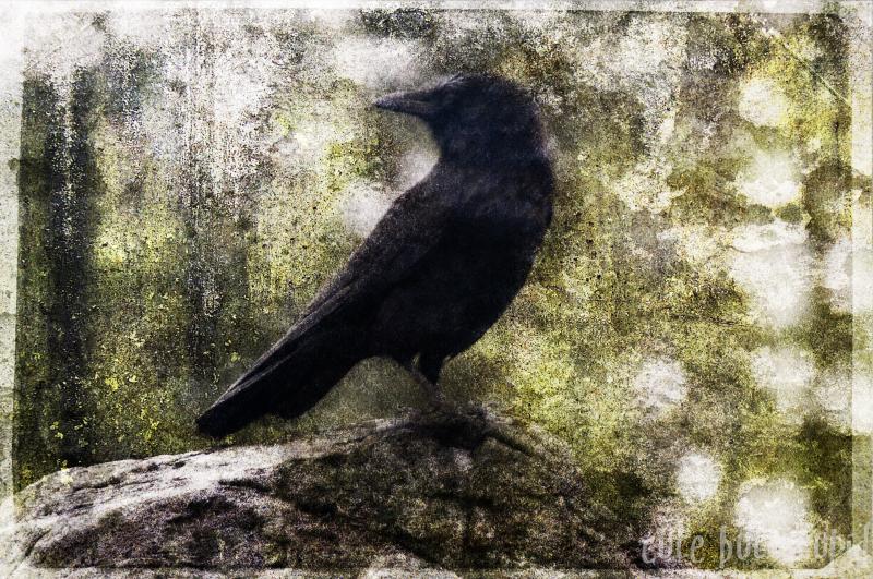 raven layered textured vancouver island tofino