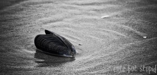 beach shell sand vancouver island west coast