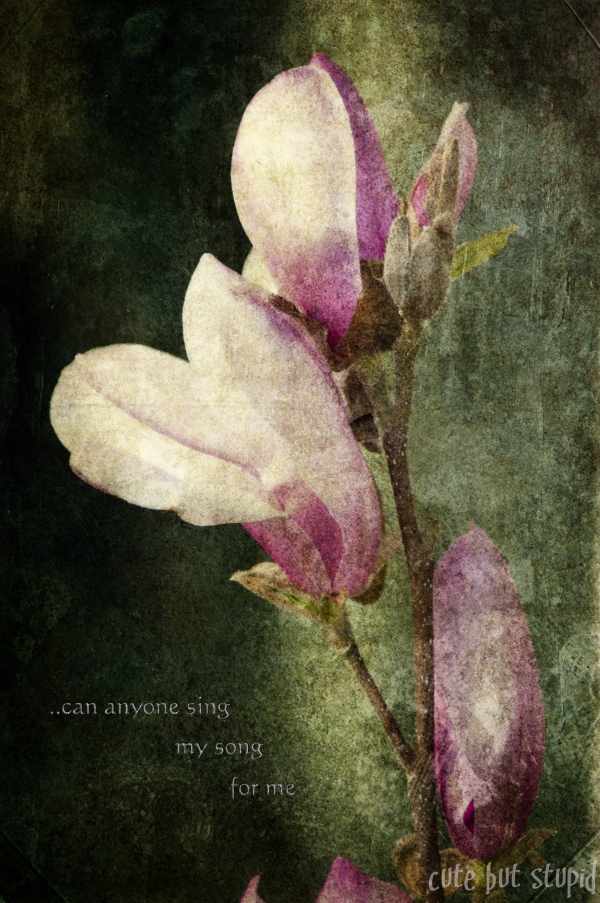 magnolia,words,macro,textured,