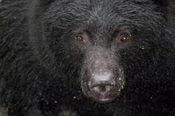 black bear thornton creek fish hatchery