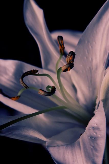 a macro shot of a flower