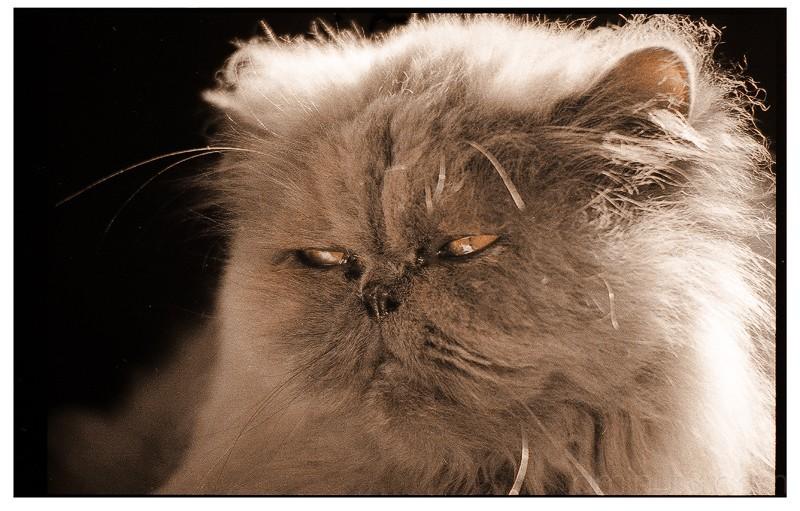 Portrait of a cat.