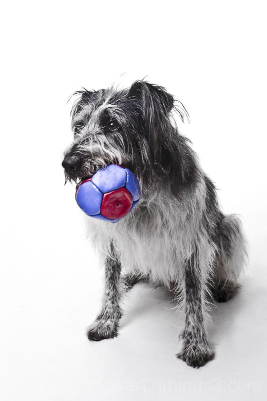 Milo the dog in the studio