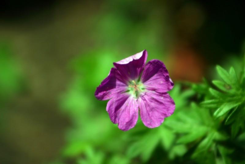 Violets & Green