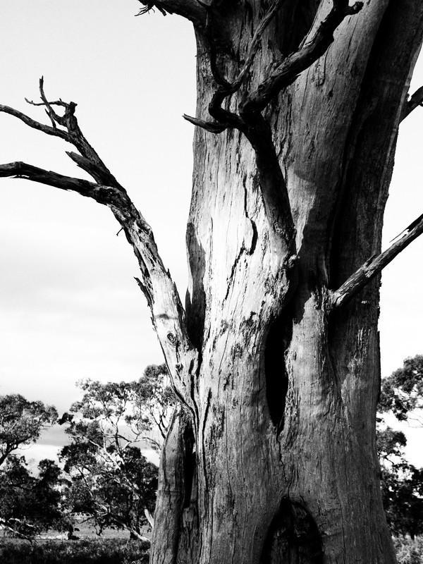 Dead tree compton BW conversion