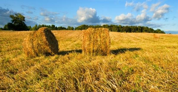 Fields of Summer