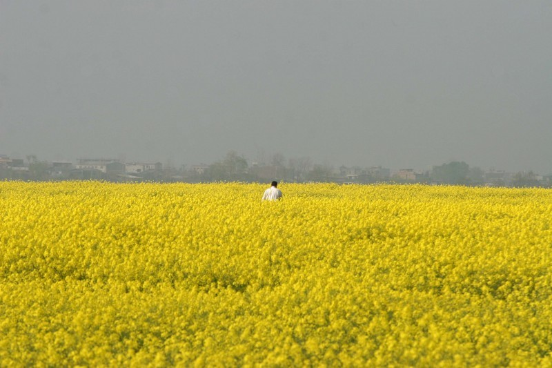 alone,yellow,iran