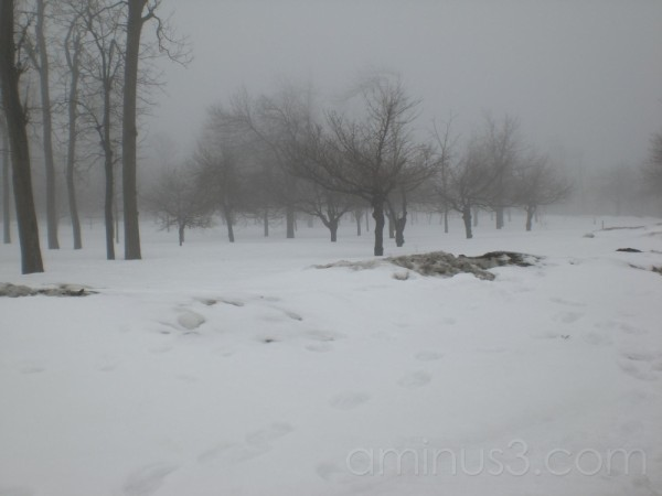 Goat Island in Niagra during Winter