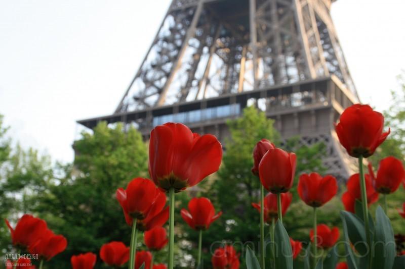 Fabuleux fleur de la Tour Eiffel - Plant & Nature Photos - aaxan@photoblog FV77